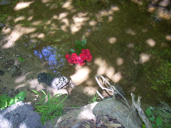 6-6-14 Sligo Creek 003