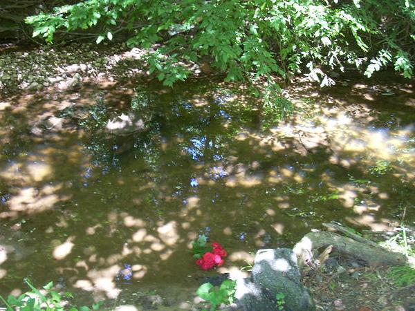 6-6-14 Sligo Creek 005