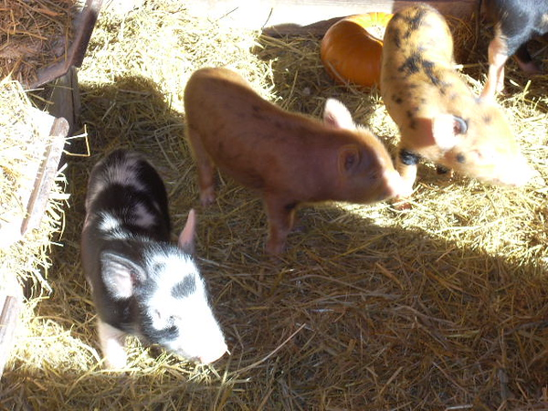 11-14-13 Farm 007