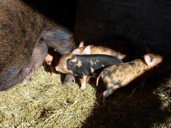 11-14-13 Farm 005