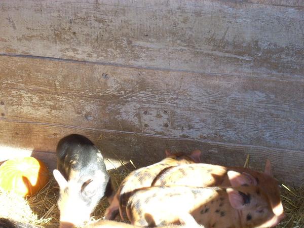 11-14-13 Farm 008