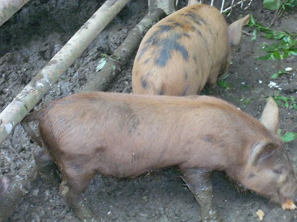6-27-13 farm 003