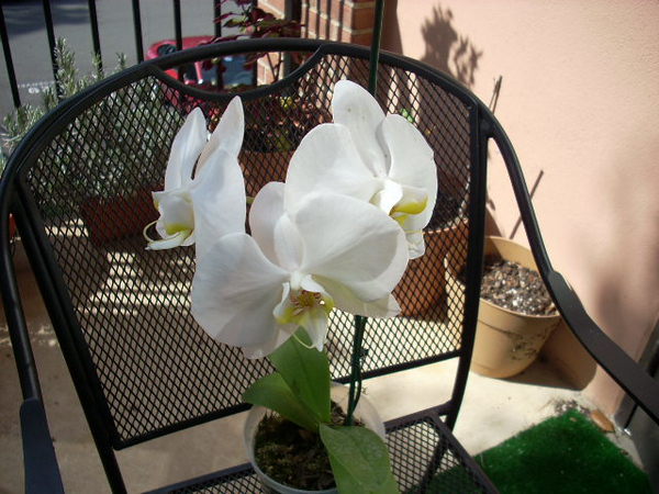 Orchid 10-09 001