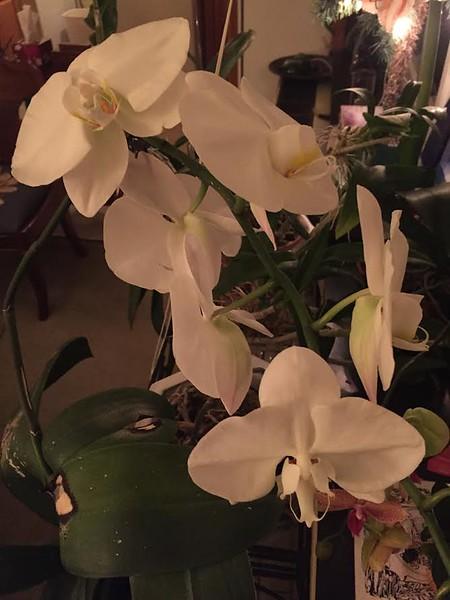3-7-17 #1 orchids