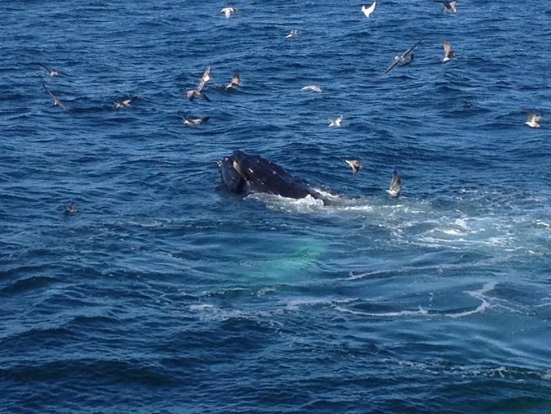 9-3-12 Cape Cod