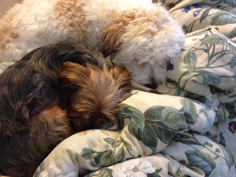 6-29-14 Harry & Snickers