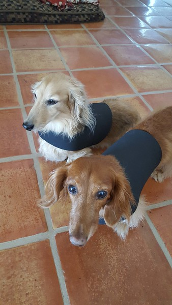 7-23-16 doggie wetsuits