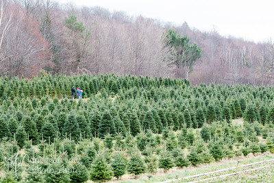 TLR-20181126-6211 Searching for the Perfect Christmas Tree, Kolarik Christmas Tree Farm