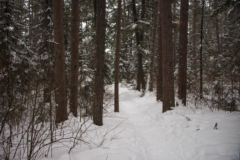The Trail to Hagman Lake