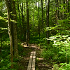 After leaving Bagley Nature Area and crossing Arrowhead Road the trail enters the beautiful mixed woods of the Hartley Nature Center.