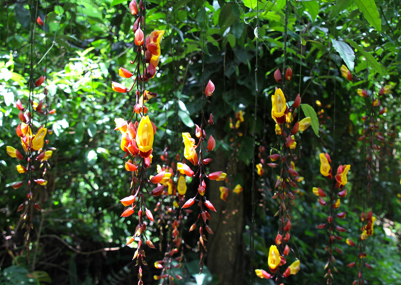 I was really captivated by the beauty of these hanging flowers but have no idea what they are. Any ideas? - Jay