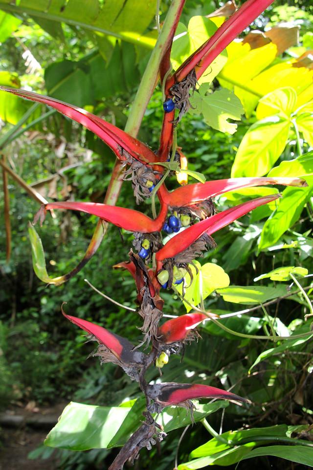 Bird of Paradise - Jay