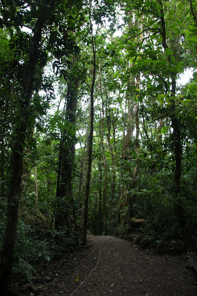 The Reserve encompasses 26,000 acres and has  6 ecological zones, 90% of which are virgin forest. Interestingly, this area contains  the most orchid species in a single place. - Jay