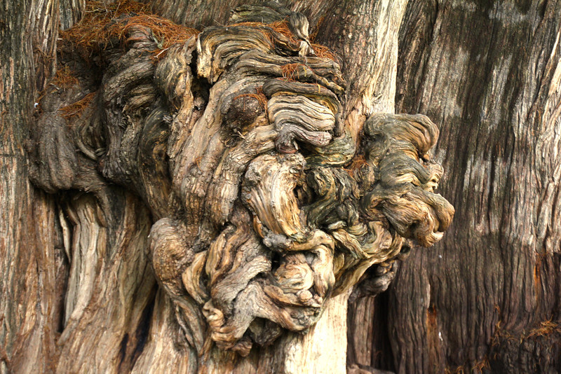 This was the most interesting knot I have ever seen it a tree. It was about the size of a Volkswagen Bug and was home to about 10 different birds.-Conor