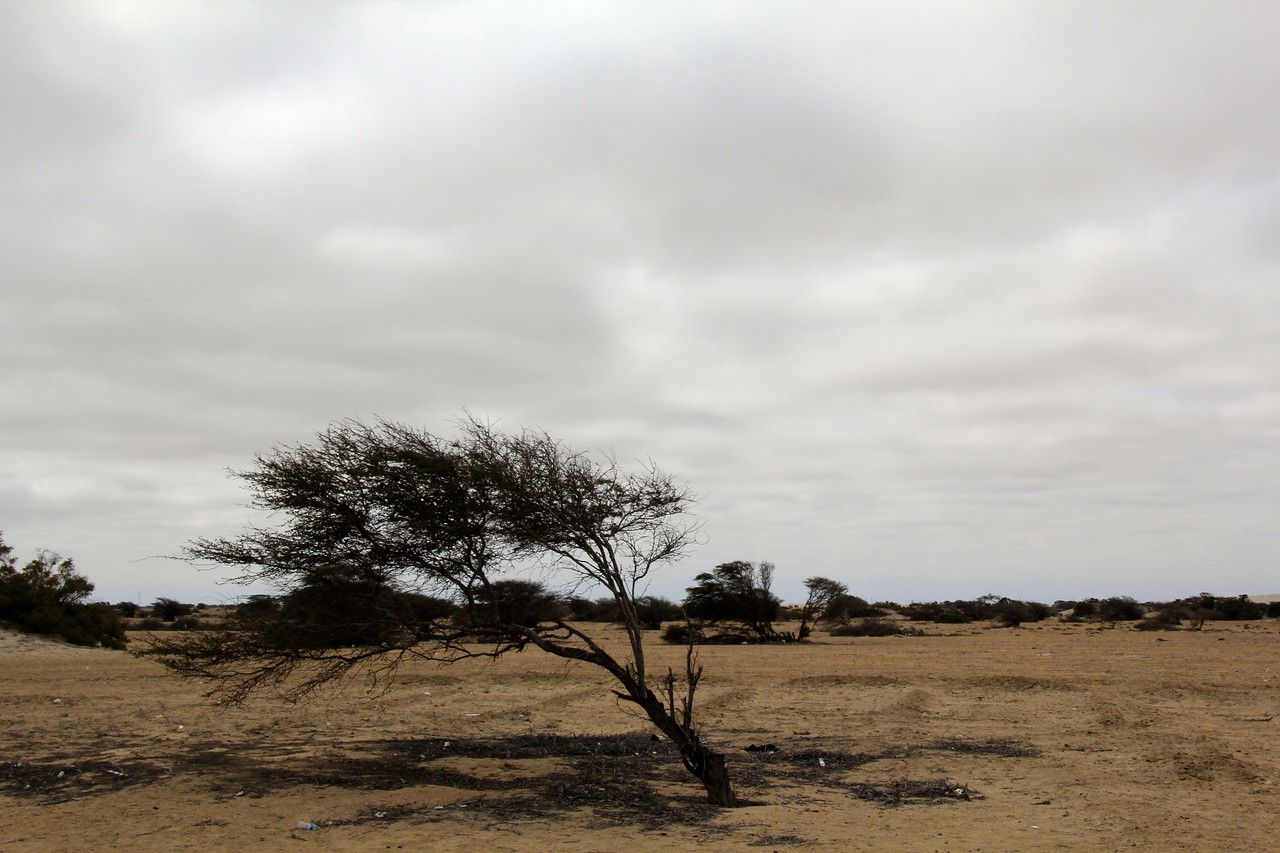 #13 - Peruvian Desert