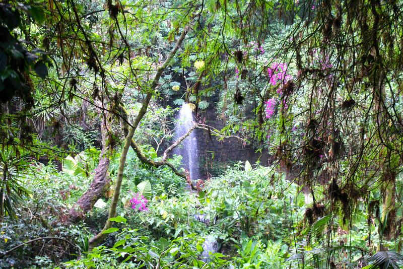 #1 - River That Sings (Uruapan, MX)