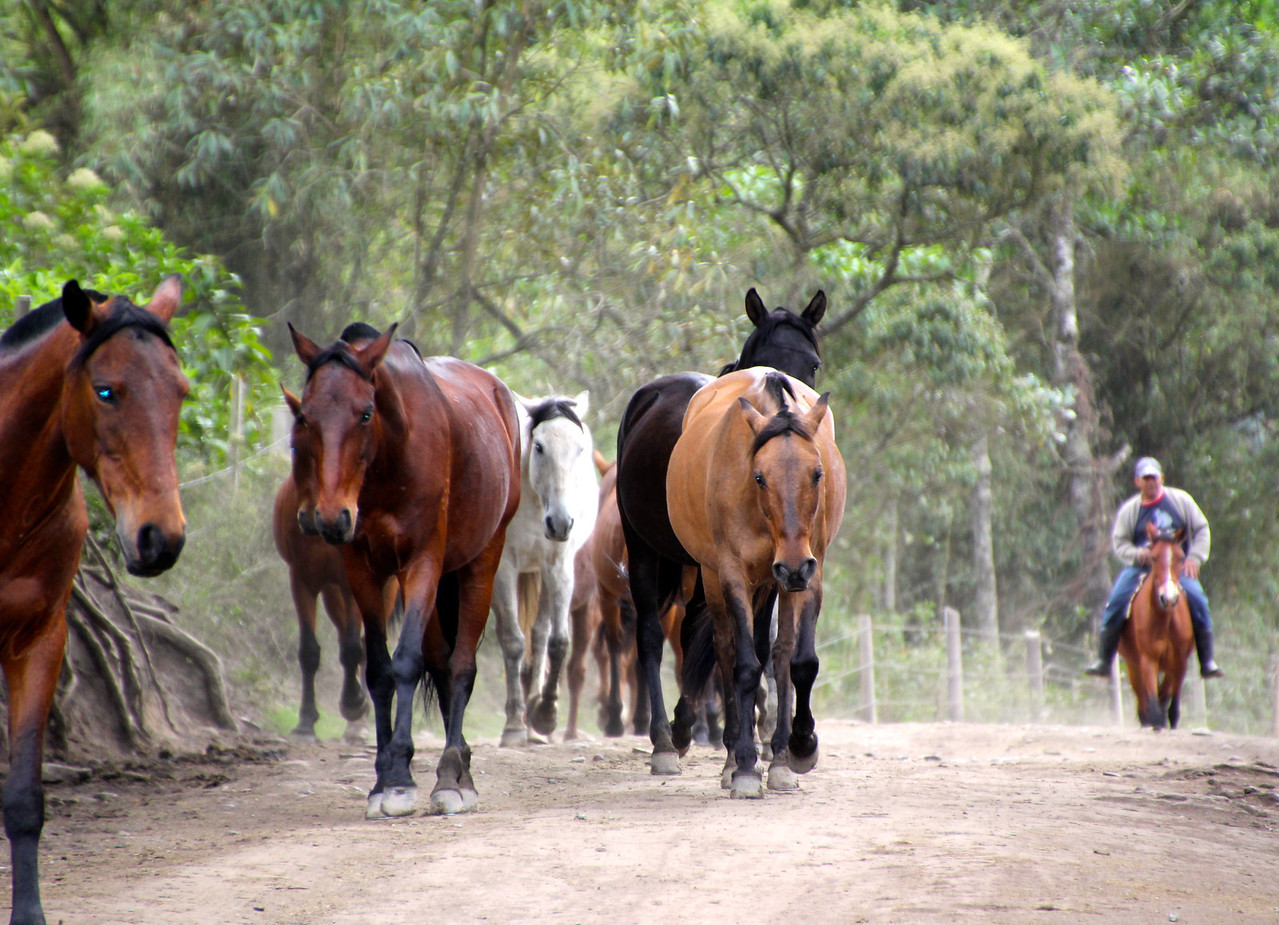 Some beautiful horses coming through the entrance to the national park. - Jay