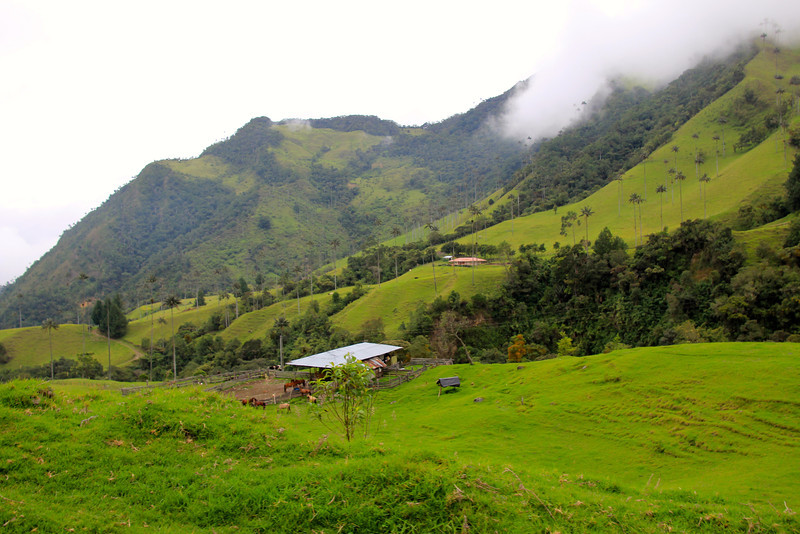 We started to work our way up into the cloud forest of the Valle del Cocora. This valley, at about 9,000ft. in elevation, is considered one of the most scenic in all of Colombia. - Jay