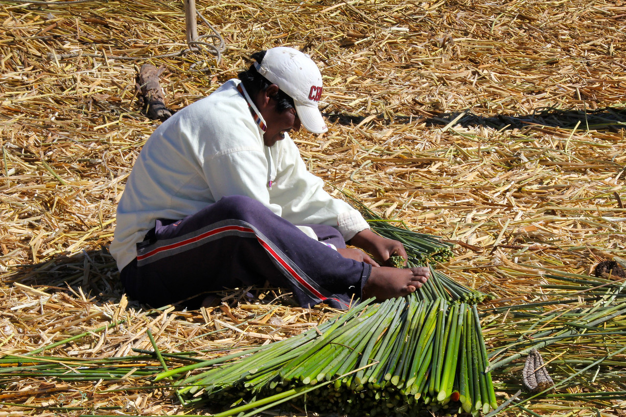 "The reeds are cut by hand (this guy used his feet as well) and then laid in a criss-cross pattern on the island. Walking on the island takes a little skill given that the ""ground"" under you actually moves. - Jay"