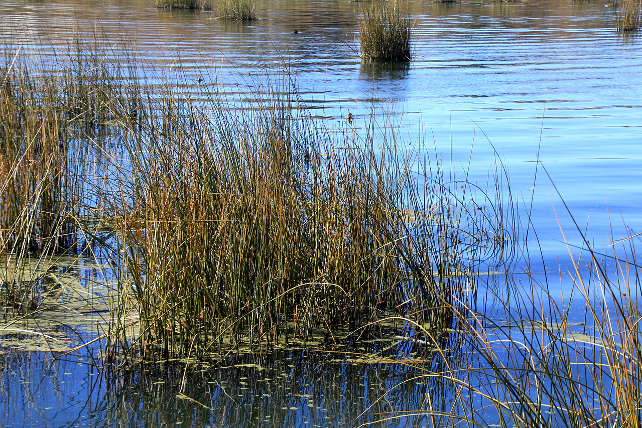 These floating reeds (totara) form the base of each island and they are cut and continually added to the top of each island. - Jay