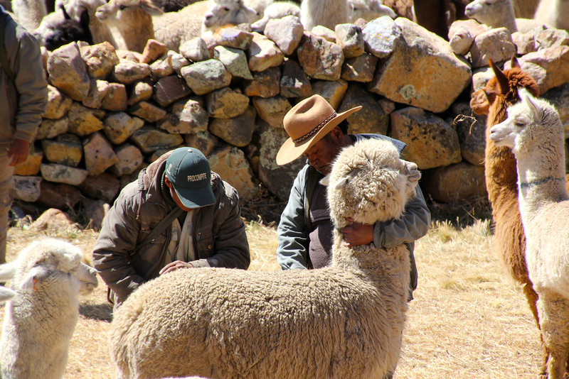 We reached the summit of our route in the aliplano at about 14,300 feet and we encountered this market where llamas were bought and sold - really interesting. - Jay