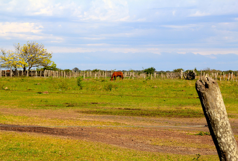 As we worked along the northern Argentinian border (Paraguay just across the river) this was a common sight. - Jay