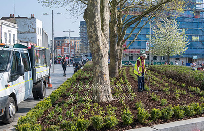 April 21st 2018 ..  New planting in General Gordon square flower beds