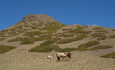 Yolyn Am (Valley of the Vutures) in Gobi Gurvansaikhan National Park