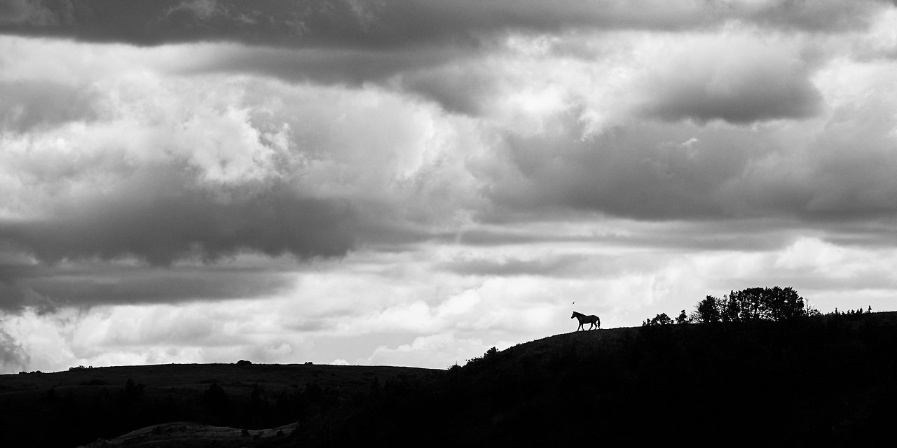 Wild Mustang Stallion<br /> Theodore Roosevelt NP