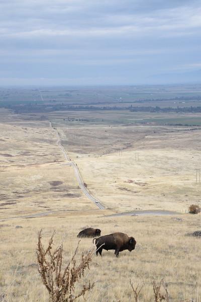 The Montana Highway