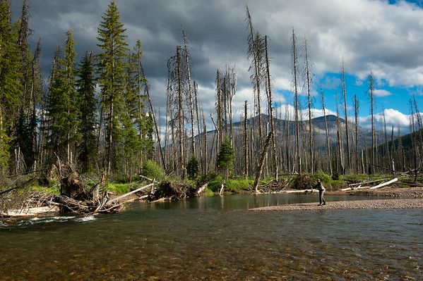 Fly fishing the Bob Marshall Wilderness on the South Fork of the Flathead River - Native cutthroat and bull trout in Montana's backcountry wilderness © Jim Klug Outdoor Photography 2014
