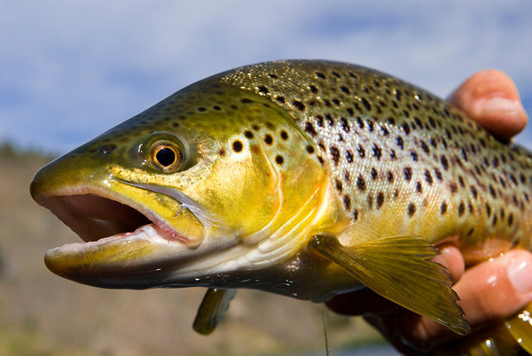 Montana Fly Fishing Scenics - Jim Klug Photos