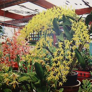 Hoa lan trong Ngân Hà Lan Viên