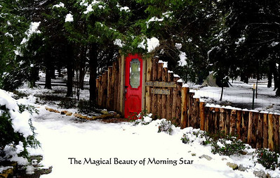 The Morning Star property provides a beautiful backdrop for the abstract combination of art & nature.