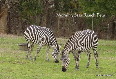Meet Marty & Zink. Morning Star's Full-Time Ranch Residents. These gentle creatures roam freely throughout the Ranch & are quite fond of carrots and having their pictures taken.