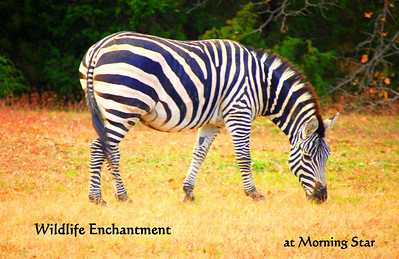 The Enchanting Wildlife at Morning Star will thrill & amaze you.