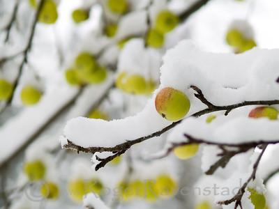 Apple Crisp Image I.D. #:  M-08-007