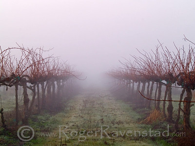 Vineyards End Image I.D. #:  V-09-005