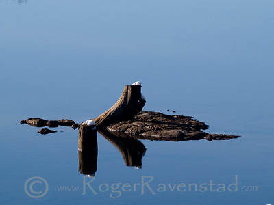 Floating Image I.D. #:  M-09-XXX  This image is available for purchase in the Fine Art Gallery