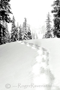 Walk in the Snow Lassen Image I.D. #:  M-04-001  Are you looking for more Black and White images? Look HERE for all Black and White work.