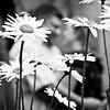 0008-100629_Shannon-Ron-Engagement-©8twenty8_Studios