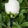 0003-130720-brianne-rich-wedding-©8twenty8-Studios