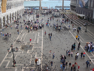 Piazza San Marco with millions of pigeons!