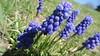 2020-05-14 Ava C - Blue Flowers