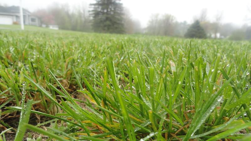 2020-05-14 Ava C - Wet Grass