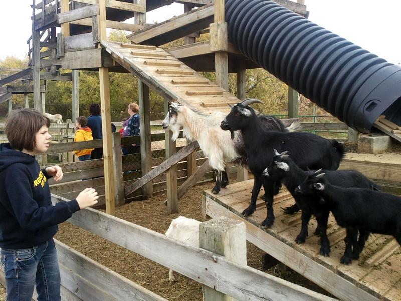 10/20/2010 IISP Nelsons Farm Market (Photographer: Chad Davis)