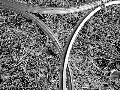 Bicycle Wheel Cucumbers. 20090705-Kavanah Garden-13
