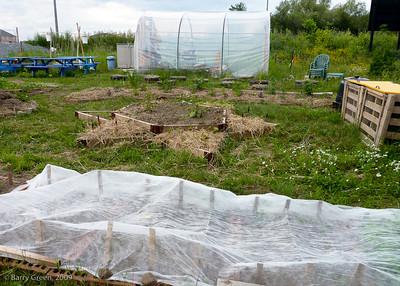 Kavanah Organic Community Teaching Garden 20090705-Kavanah Garden-28