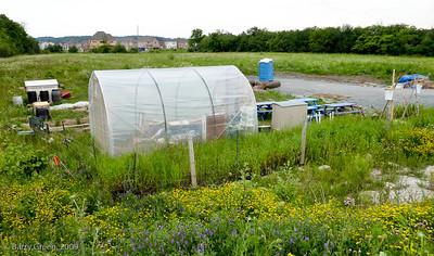 Kavanah Organic Community Teaching Garden 20090705-Kavanah Garden-46