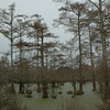 20050304_MKittrell_005307